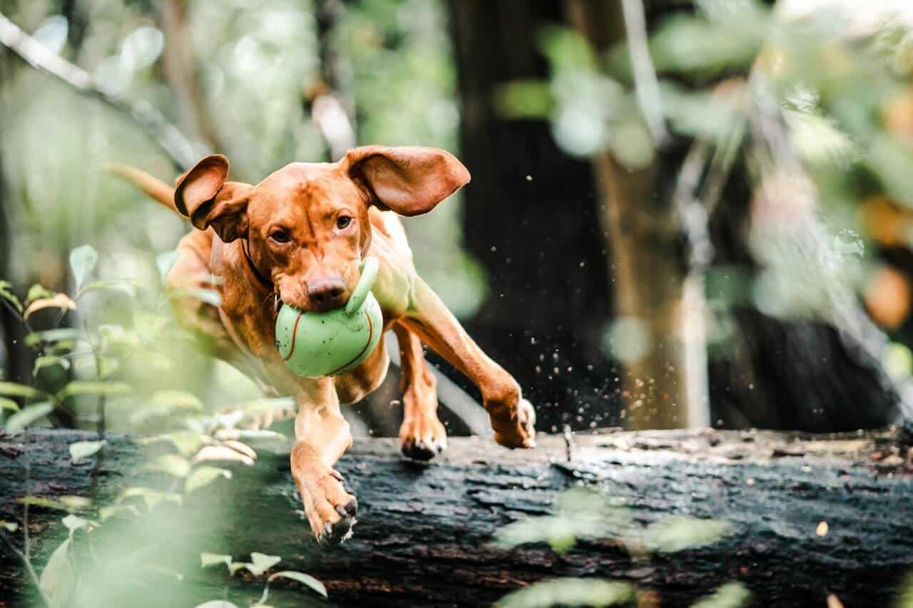 How Much Exercise Do Dogs Need?