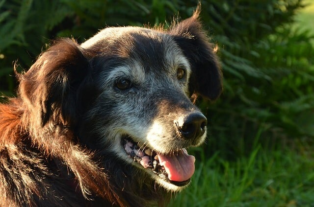 HOW MUCH EXERCISE DO ELDERLY DOGS NEED