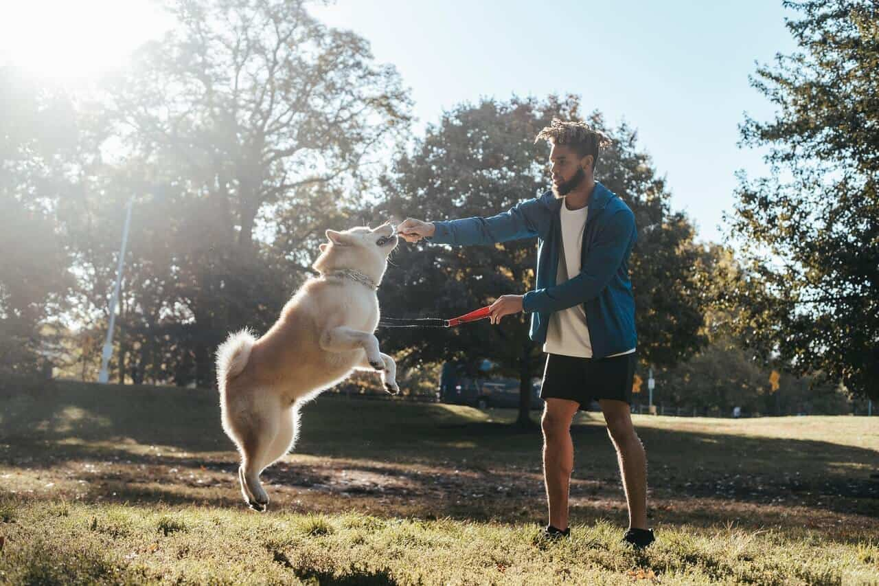 How much exercise do dogs needs