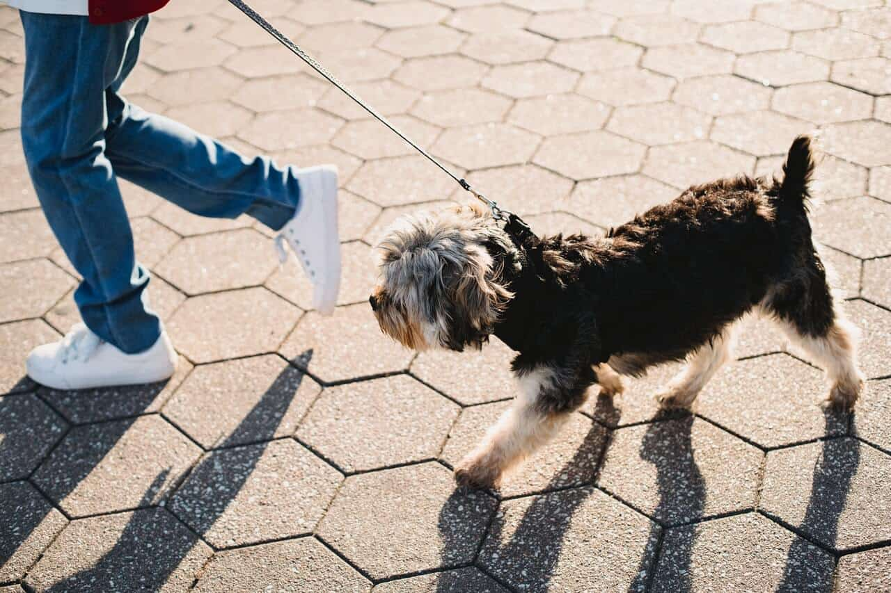 can dogs walk on hot pavement