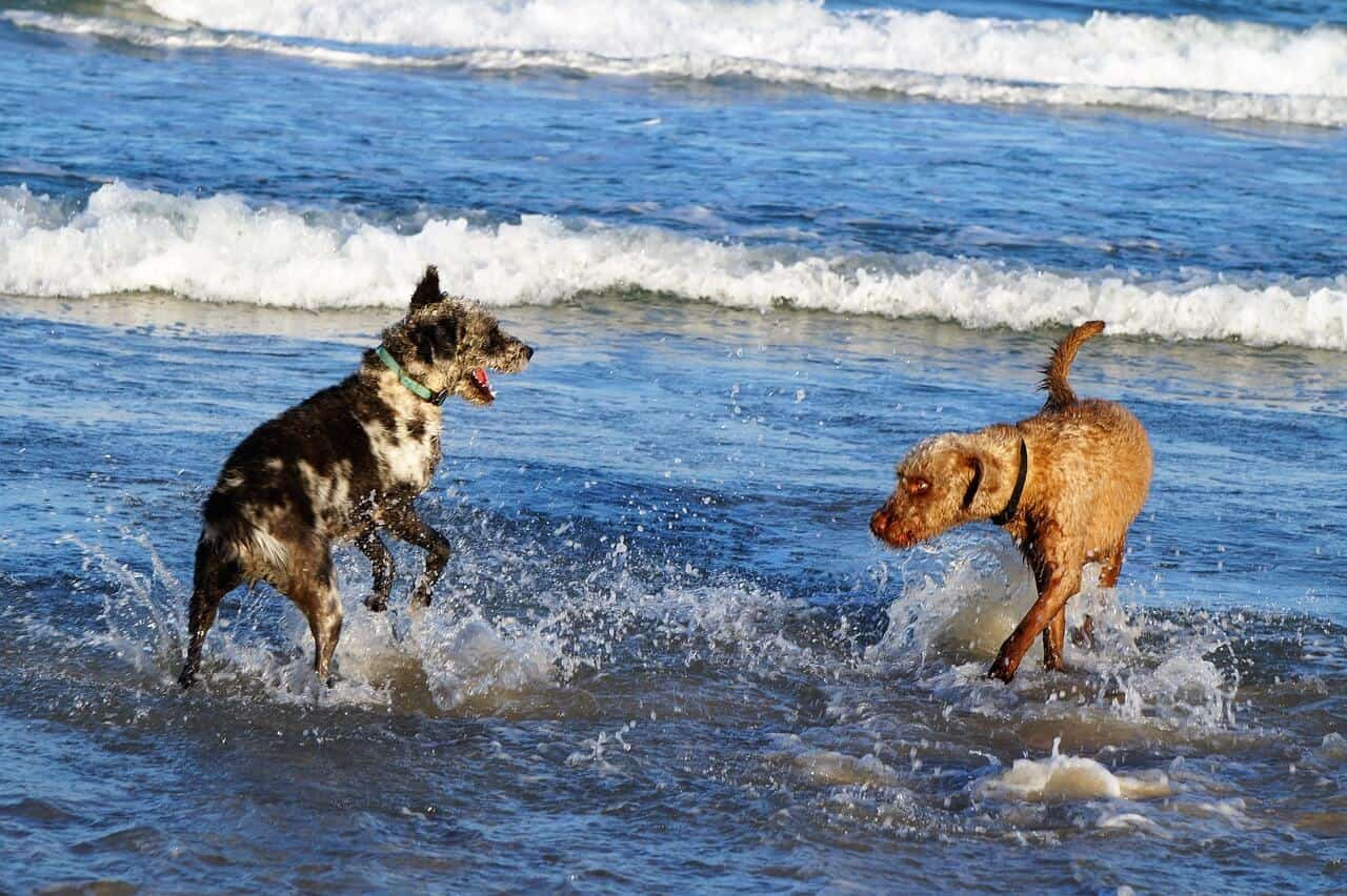 Salt water poisoning in dogs